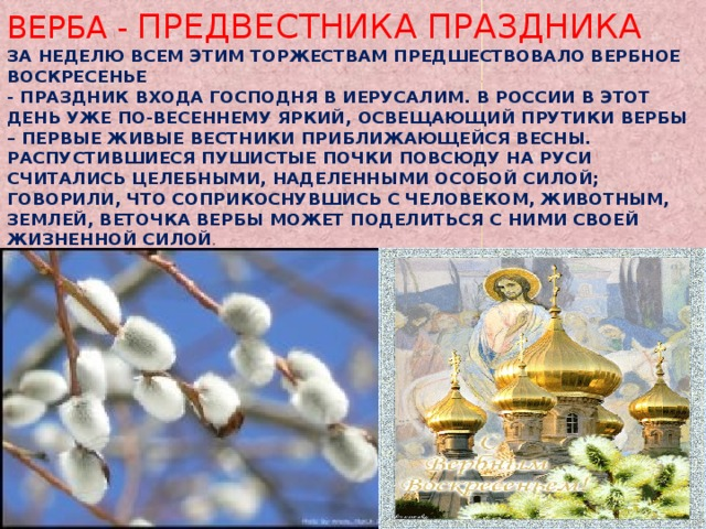 Верба - предвестника праздника  За неделю всем этим торжествам Предшествовало Вербное воскресенье  - праздник Входа Господня в Иерусалим. В России в этот день уже по-весеннему яркий, освещающий прутики вербы – первые живые вестники приближающейся весны. Распустившиеся пушистые почки повсюду на Руси считались целебными, наделенными особой силой; говорили, что соприкоснувшись с человеком, животным, землей, веточка вербы может поделиться с ними своей жизненной силой .