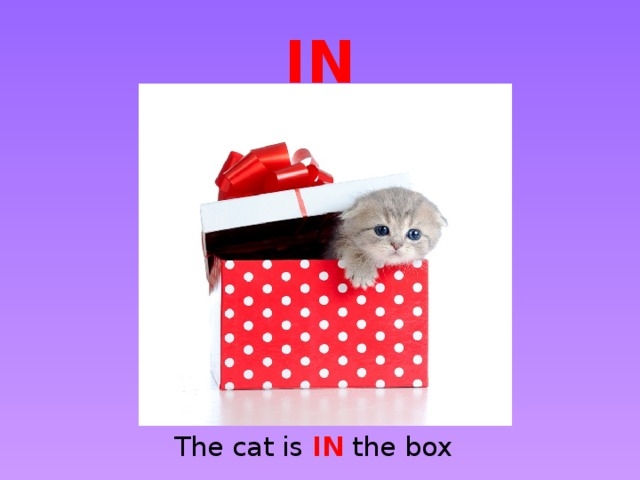IN The cat is IN the box