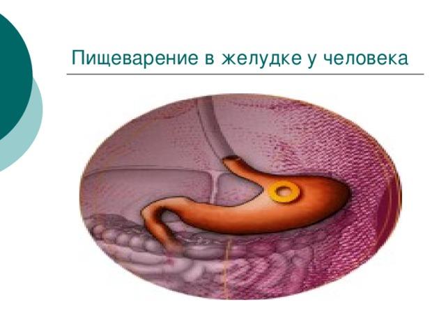 Пищеварение в желудке у человека