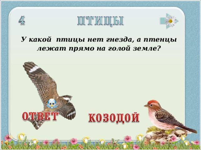 У какой птицы нет гнезда, а птенцы лежат прямо на голой земле? 3