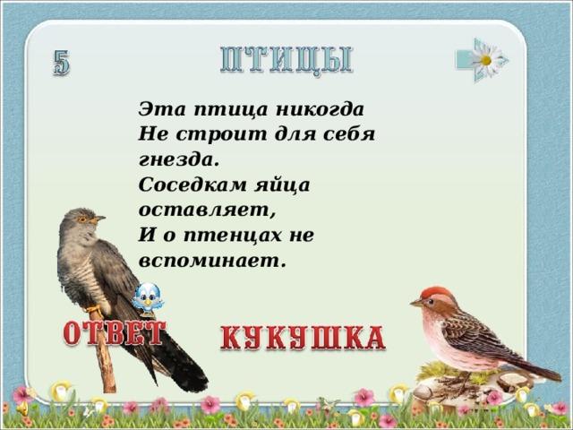 Эта птица никогда Не строит для себя гнезда. Соседкам яйца оставляет, И о птенцах не вспоминает.