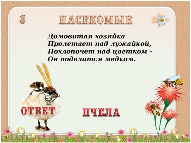 Домовитая хозяйка  Пролетает над лужайкой,  Похлопочет над цветком -  Он поделится медком.