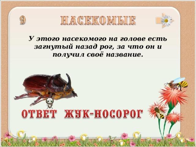 У этого насекомого на голове есть загнутый назад рог, за что он и получил своё название.