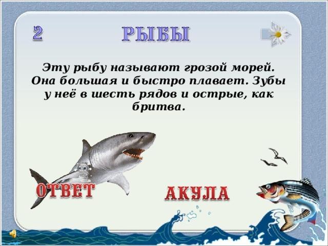 Эту рыбу называют грозой морей.  Она большая ибыстро плавает. Зубы унеё вшесть рядов иострые, как бритва.