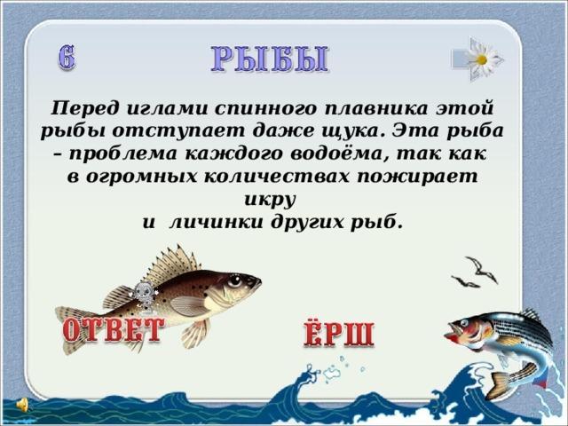 Перед иглами спинного плавника этой рыбы отступает даже щука. Эта рыба – проблема каждого водоёма, так как в огромных количествах пожирает икру и личинки других рыб.