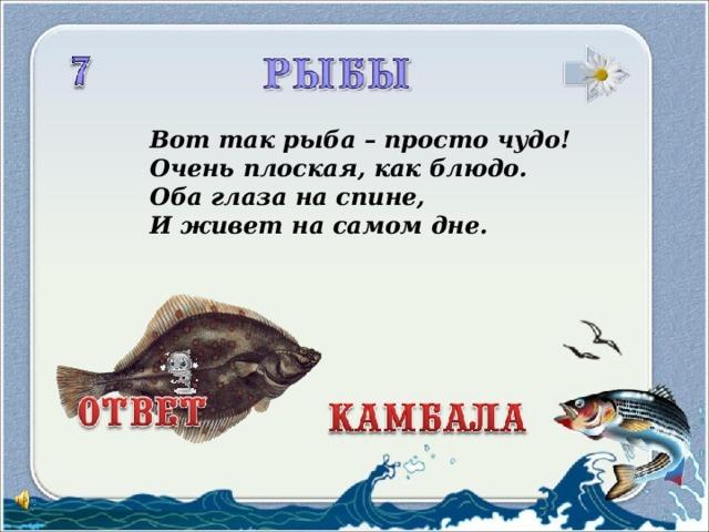 Вот так рыба – просто чудо!  Очень плоская, как блюдо.  Оба глаза на спине,  И живет на самом дне.