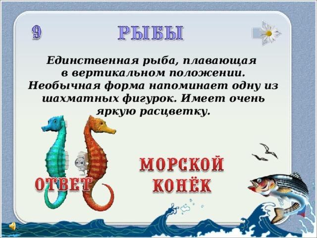 Единственная рыба, плавающая в вертикальном положении. Необычная форма напоминает одну из шахматных фигурок. Имеет очень яркую расцветку.