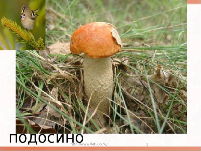 Мастер презентаций Под деревцем, под осинкой  Стоит мальчик с пальчик,  На нем сер кафтанчик,  Красна шапочка подосиновик http://www.deti-66.ru/