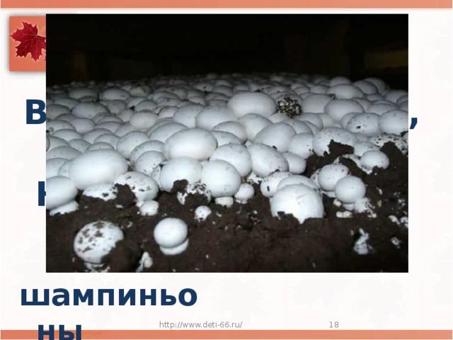 Выросли в подвале,  Света не видали,  На в салат попали. шампиньоны http://www.deti-66.ru/