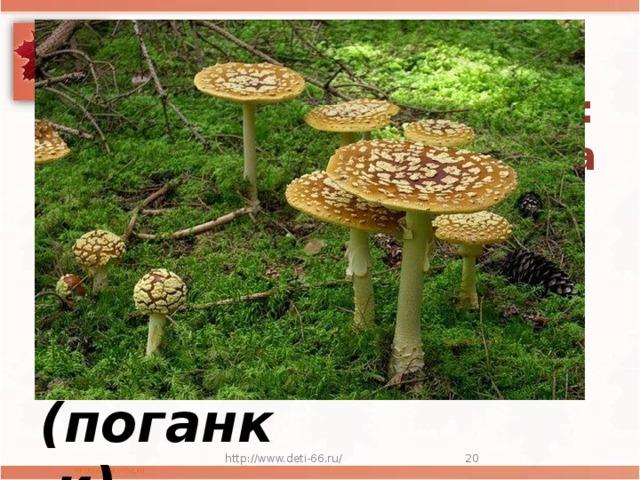 Мастер презентаций  Посмотрите-ка, ребята: тут лисички, там – опята  Ну, а это на полянке ядовитые ...  (поганки) http://www.deti-66.ru/