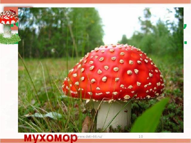 Ножка белая, прямая,  Шляпа красная такая.  А на шляпке, на верхушке,  Беленькие конопушки мухомор http://www.deti-66.ru/