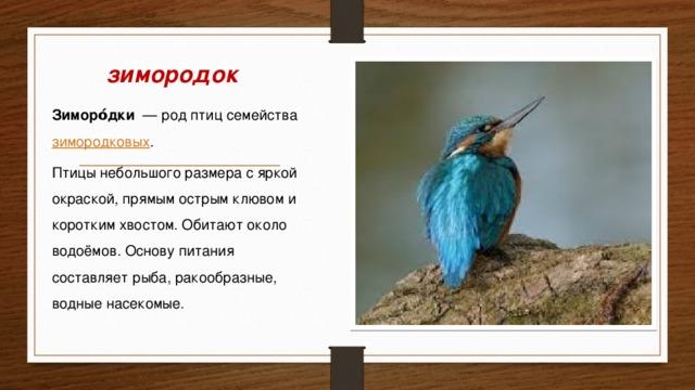 Приморье 2016 (часть 2) - Дневник наблюдений птицДневник ...   360x640