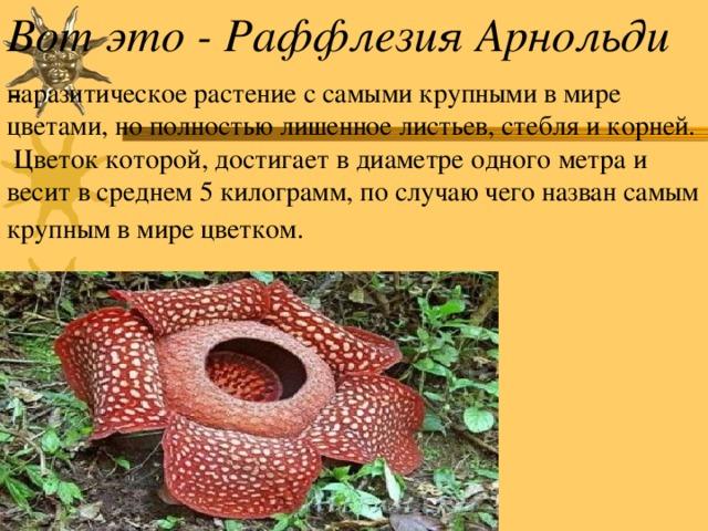 Вот это - Раффлезия Арнольди -  паразитическое растение с самыми крупными в мире цветами, но полностью лишенное листьев, стебля и корней.  Цветок которой, достигает в диаметре одного метра и весит в среднем 5 килограмм, по случаю чего назван самым крупным в мире цветком.