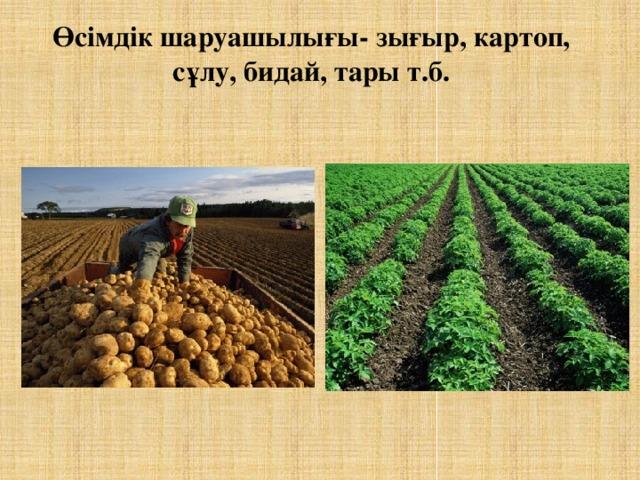 Өсімдік шаруашылығы- зығыр, картоп, сұлу, бидай, тары т.б.