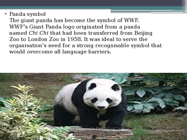 Panda symbol  The giant panda has become the symbol of WWF.  WWF'sGiant Pandalogo originated from a panda named Chi Chi that had been transferred fromBeijing ZootoLondon Zooin 1958. It was ideal to serve the organisation's need for a strong recognisable symbol that would overcome all language barriers.