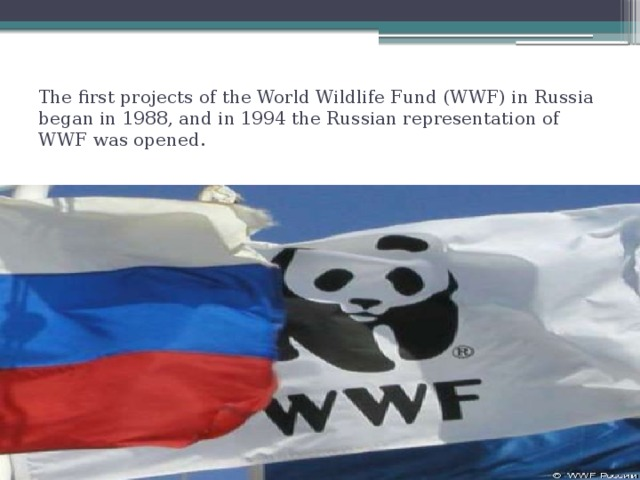 The first projects of the World Wildlife Fund (WWF) in Russia began in 1988, and in 1994 the Russian representation of WWF was opened.