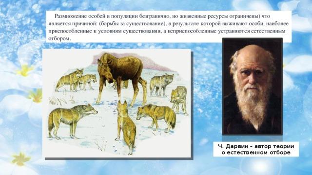 Размножение особей в популяции безгранично, но жизненные ресурсы ограничены) что является причиной: (борьбы за существование), в результате которой выживают особи, наиболее приспособленные к условиям существования, а неприспособленные устраняются естественным отбором. Ч. Дарвин – автор теории о естественном отборе