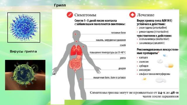 Грипп Вирусы гриппа