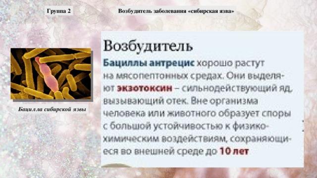 Возбудитель заболевания «сибирская язва» Группа 2 Бацилла сибирской язвы