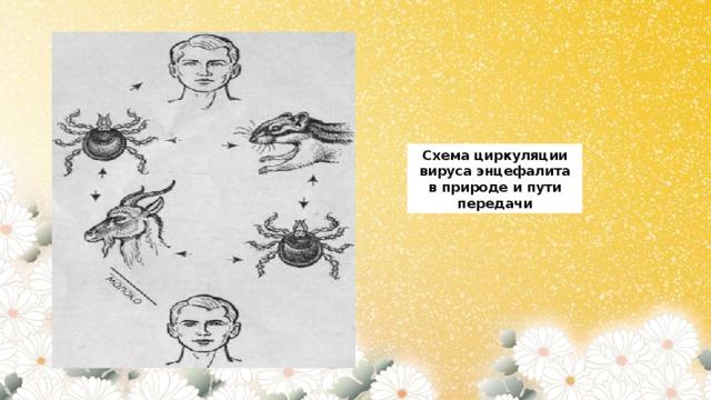 Схема циркуляции вируса энцефалита в природе и пути передачи