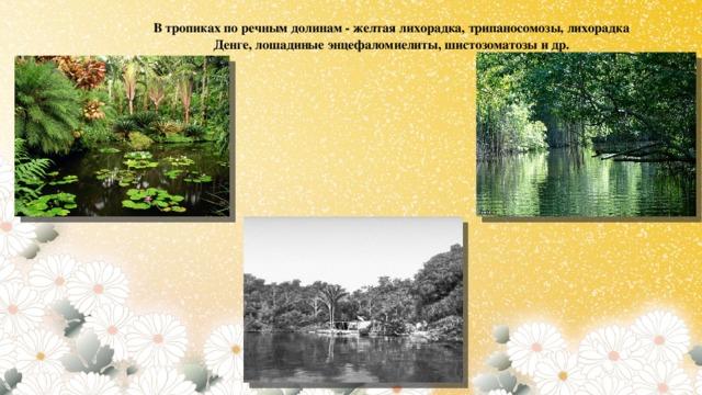 В тропиках по речным долинам - желтая лихорадка, трипаносомозы, лихорадка Денге, лошадиные энцефаломиелиты, шистозоматозы и др.