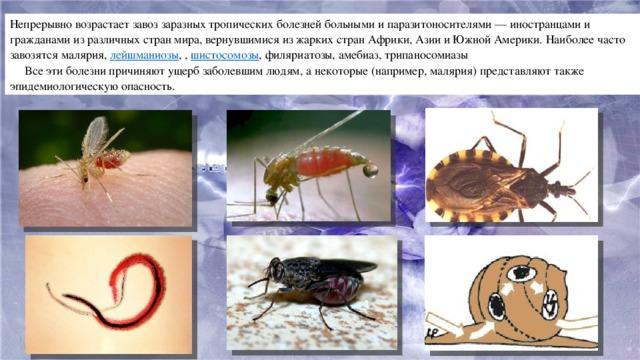 Непрерывно возрастает завоз заразных тропических болезней больными и паразитоносителями — иностранцами и гражданами из различных стран мира, вернувшимися из жарких стран Африки, Азии и Южной Америки. Наиболее часто завозятся малярия, лейшманиозы , , шистосомозы , филяриатозы, амебиаз, трипаносомиазы  Все эти болезни причиняют ущерб заболевшим людям, а некоторые (например, малярия) представляют также эпидемиологическую опасность.