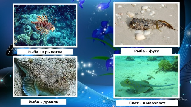 Рыба - фугу Рыба - крылатка Рыба - дракон Скат - шилохвост