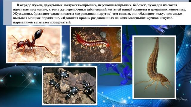 В отряде жуков, двукрылых, полужесткокрылых, перепончатокрылых, бабочек, пухоедов имеются ядовитые насекомые, к тому же переносчики заболеваний жителей нашей планеты и домашних животных. Жужелицы, брызгают едкие кислоты (муравьиная и другие) тем самым, они обжигают кожу, частенько вызывая мощное поражение. «Ядовитая кровь» раздавленных на коже маленьких жучков и жуков-нарывников вызывает пузырчатый.