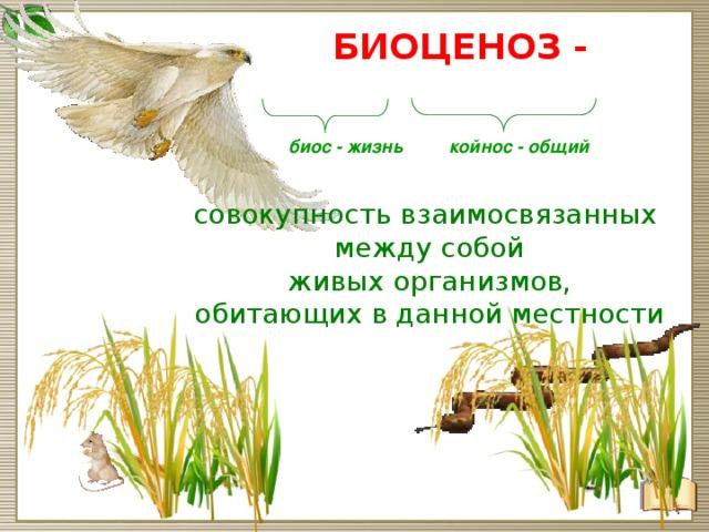 Доклад естественные и искусственные биоценозы 7153