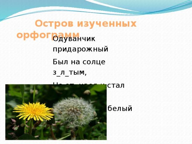 Остров изученных орфограмм Одуванчик придарожный Был на солце з_л_тым, Но от цвел и стал похожим На пушистый белый дым.