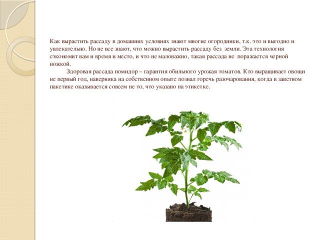 Как вырастить рассаду в домашних условиях знают многие огородники, т.к. это и выгодно и увлекательно. Но не все знают, что можно вырастить рассаду без земли. Эта технология сэкономит вам и время и место, и что не маловажно, такая рассада не поражается черной ножкой.  Здоровая рассада помидор – гарантия обильного урожая томатов. Кто выращивает овощи не первый год, наверняка на собственном опыте познал горечь разочарования, когда в заветном пакетике оказывается совсем не то, что указано на этикетке.