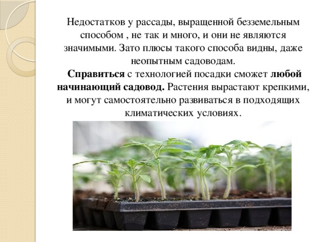 Недостатков у рассады, выращенной безземельным способом , не так и много, и они не являются значимыми. Зато плюсы такого способа видны, даже неопытным садоводам.   Справиться с технологией посадки сможет любой начинающий садовод. Растения вырастают крепкими, и могут самостоятельно развиваться в подходящих климатических условиях.