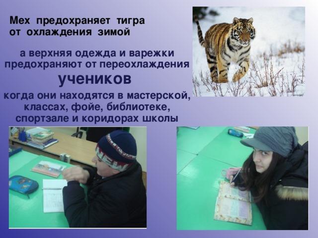 Мех предохраняет тигра от охлаждения зимой а верхняя одежда и варежки предохраняют от переохлаждения учеников когда они находятся в мастерской, классах, фойе, библиотеке, спортзале и коридорах школы 6