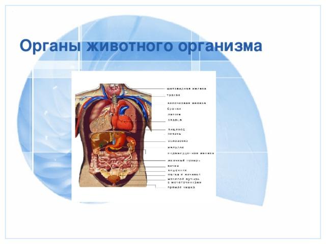 Органы животного организма