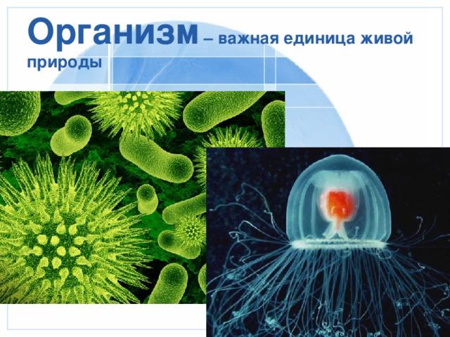 Организм – важная единица живой природы