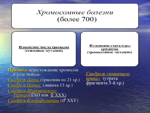 Хромосомные болезни  (более 700)  а) изменение числа хромосом  (геномные мутации)  б) изменение структуры хромосом  (хромосомные мутации)   Причина: нерасхождение хромосом в ходе мейоза. Синдром Дауна (трисомия по 21 хр.) Синдром Патау   (лишняя 13 хр.) Синдром Шерешевского-Тернера (♀ХО или ♀ ХХХ) Синдром Клайнфельтера  (♂ XX У)  Синдром «кошачьего крика» (утрата фрагмента 5-й хр.)