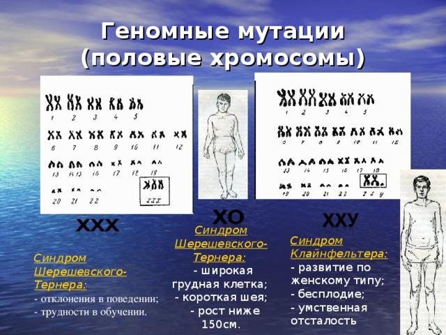 Геномные мутации (половые хромосомы) Синдром Шерешевского-Тернера:   - широкая грудная клетка; - короткая шея;  - рост ниже 150см. Синдром Клайнфельтера:  - развитие по женскому типу; - бесплодие; - умственная отсталость Синдром Шерешевского-Тернера:  - отклонения в поведении; - трудности в обучении.