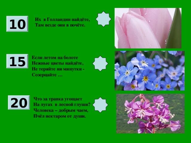 Их в Голландии найдёте, Там везде они в почёте. 10 Если летом на болоте Нежные цветы найдёте, Не теряйте ни минутки - Созерцайте … 15 Что за травка угощает На лугах в лесной глуши? Человека – добрым чаем, Пчёл нектаром от души. 20