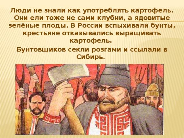 Люди не знали как употреблять картофель. Они ели тоже не сами клубни, а ядовитые зелёные плоды. В России вспыхивали бунты, крестьяне отказывались выращивать картофель. Бунтовщиков секли розгами и ссылали в Сибирь.