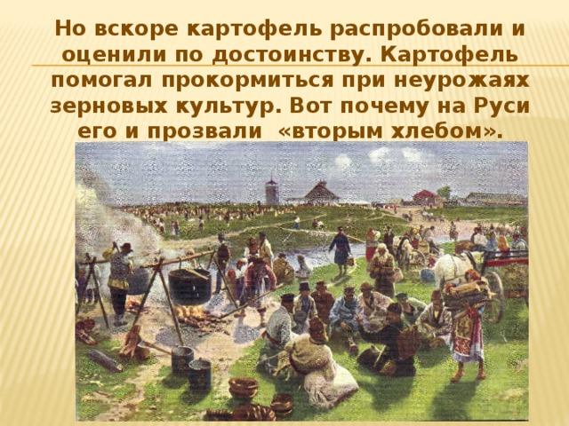Но вскоре картофель распробовали и оценили по достоинству. Картофель помогал прокормиться при неурожаях зерновых культур. Вот почему на Руси его и прозвали «вторым хлебом».