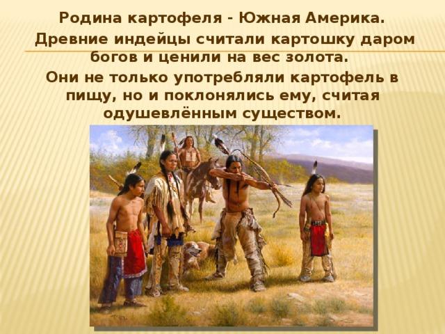 Родина картофеля - Южная Америка.  Древние индейцы считали картошку даром богов и ценили на вес золота. Они не только употребляли картофель в пищу, но и поклонялись ему, считая одушевлённым существом.