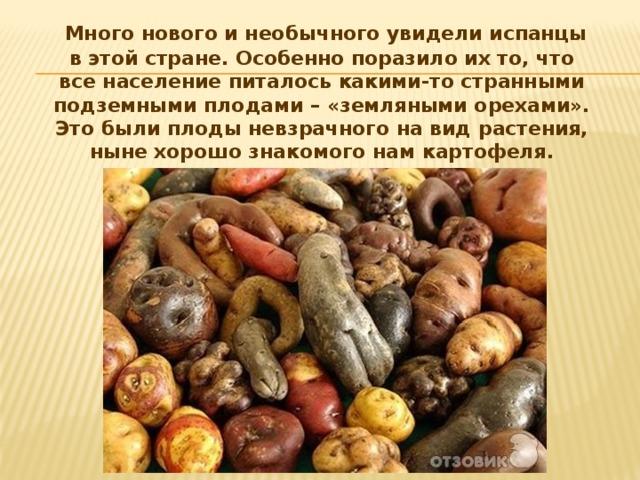 Много нового и необычного увидели испанцы в этой стране. Особенно поразило их то, что все население питалось какими-то странными подземными плодами – «земляными орехами». Это были плоды невзрачного на вид растения, ныне хорошо знакомого нам картофеля.