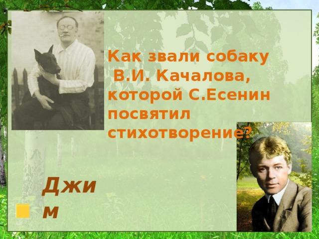 Как звали собаку  В.И. Качалова, которой С.Есенин посвятил стихотворение? Джим