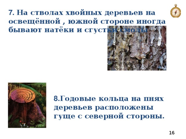 7. На стволах хвойных деревьев на освещённой , южной стороне иногда бывают натёки и сгустки смолы 8. Годовые кольца на пнях деревьев расположены гуще с северной стороны.
