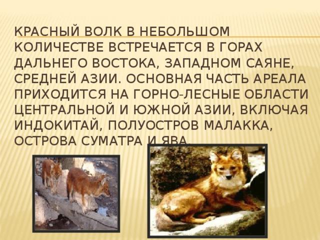 Красный волк в небольшом количестве встречается в горах Дальнего Востока, Западном Саяне, Средней Азии. Основная часть ареала приходится на горно-лесные области Центральной и Южной Азии, включая Индокитай, полуостров Малакка, острова Суматра и Ява.