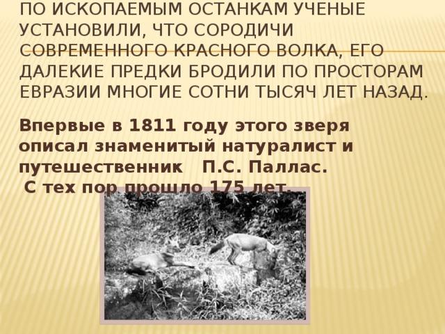 По ископаемым останкам ученые установили, что сородичи современного красного волка, его далекие предки бродили по просторам Евразии многие сотни тысяч лет назад.     Впервые в 1811 году этого зверя описал знаменитый натуралист и путешественник П.С. Паллас.  С тех пор прошло 175 лет.