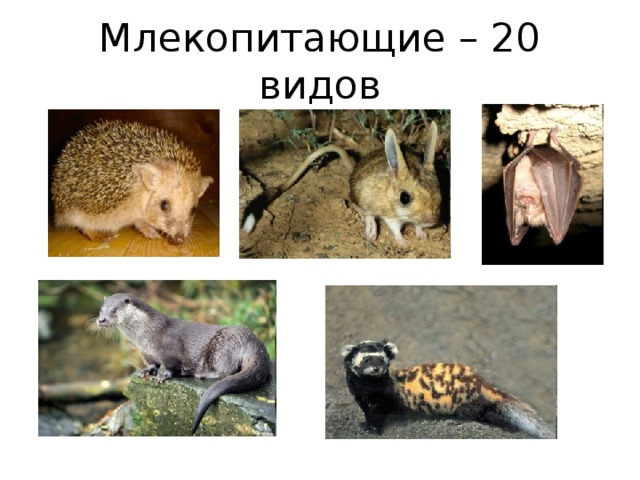 Млекопитающие – 20 видов