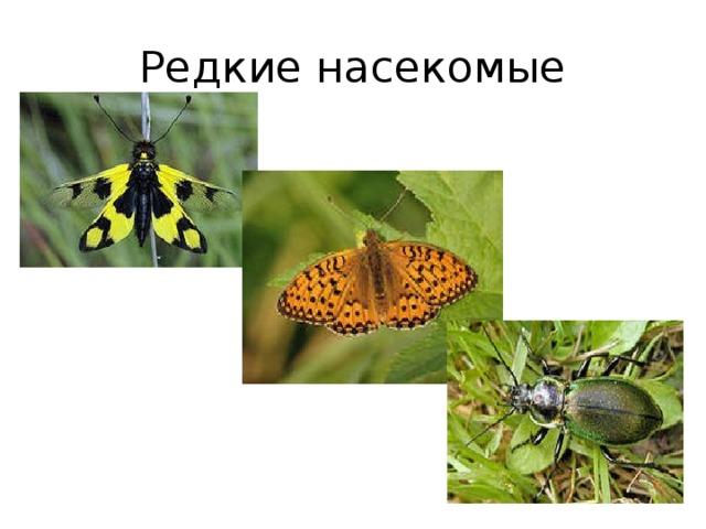 Редкие насекомые
