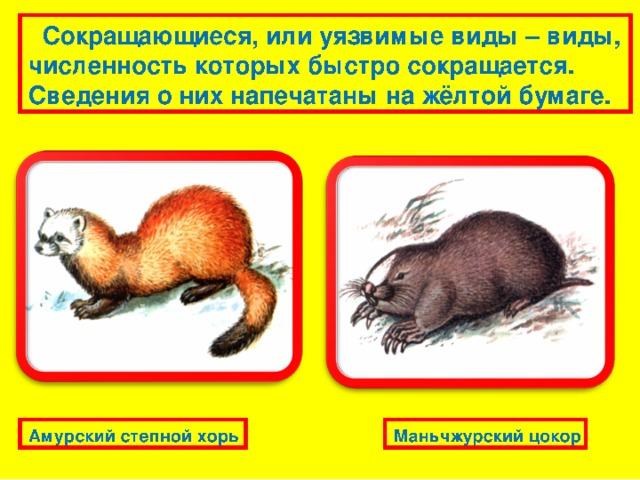 Исчезающие виды, спасение которых невозможно без специальных мер охраны, помещены на красных листах бумаги. Сахалинская кабарга Жёлтая пеструшка