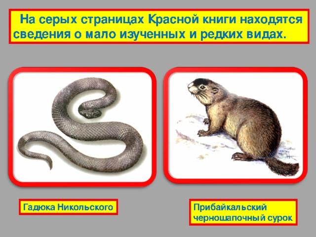 Сокращающиеся, или уязвимые виды – виды, численность которых быстро сокращается. Сведения о них напечатаны на жёлтой бумаге. Амурский степной хорь Маньчжурский цокор